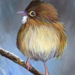 Art: Golden headed Cisticola ACEO by Artist Janet M Graham