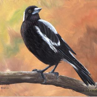 Art: Australian Magpie No 6 by Artist Janet M Graham