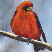 Art: Scarlet Tanager No 4 by Janet M Graham