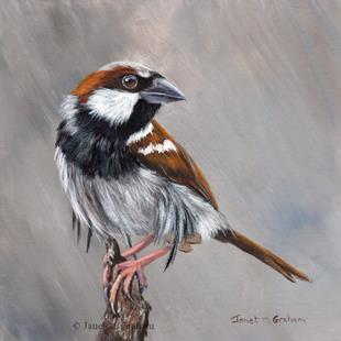 Art: Sparrow by Artist Janet M Graham