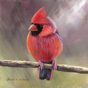 Art: Cardinal No 5 by Artist Janet M Graham
