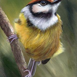 Art: Rufous Crowned Tody Flycatcher by Artist Janet M Graham